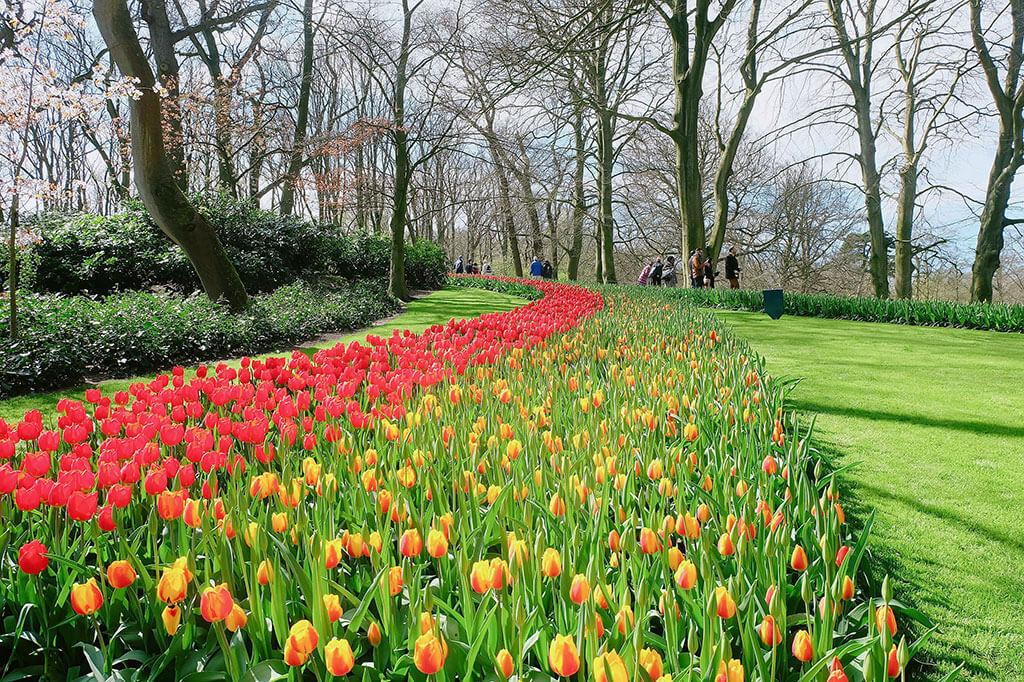 Mùa xuân đi thăm vườn hoa Keukenhof nổi tiếng ở Amsterdam 2 - Where my heart goes