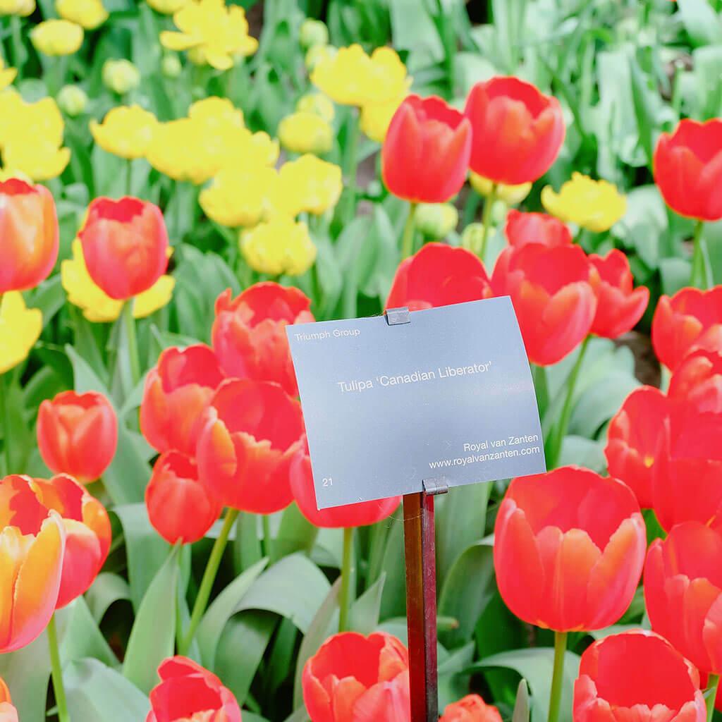 Mùa xuân đi thăm vườn hoa Keukenhof nổi tiếng ở Amsterdam 4 - Where my heart goes