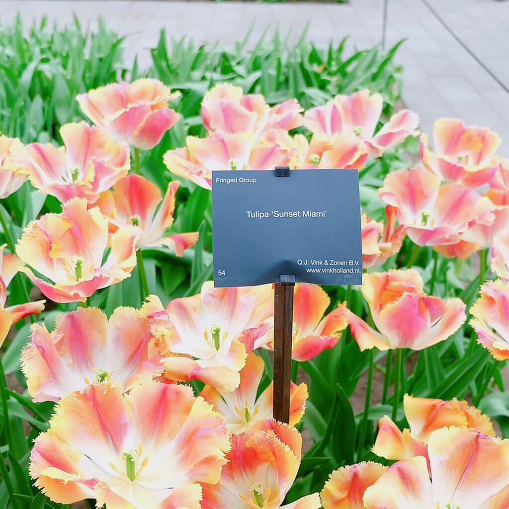 Mùa xuân đi thăm vườn hoa Keukenhof nổi tiếng ở Amsterdam 5 - Where my heart goes